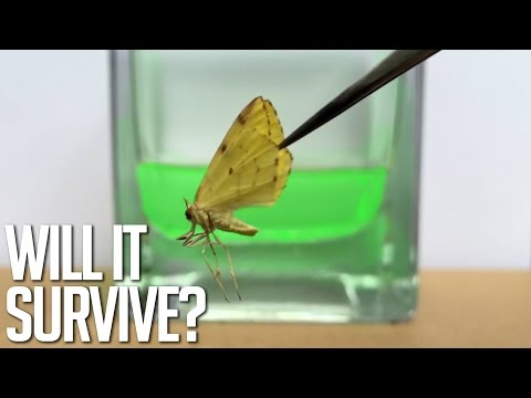 Sulfuric Acid Vs Fly, Oobleck, Battery, Flower, Moth